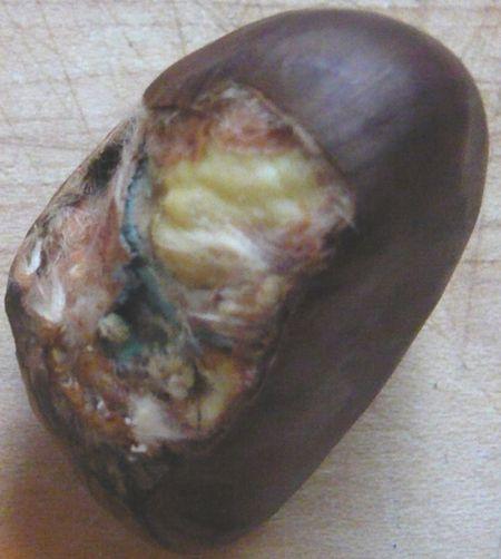 Chestnutrot