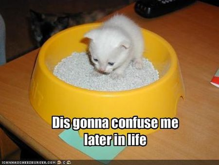 Funny-pictures-kitten-is-going-to-be-confused-later-in-life